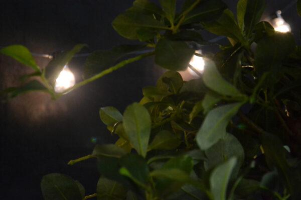 Beach-party-hehkulamppu-kasvi-vuokrakaluste